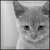 Аватар для Славик Зачётов